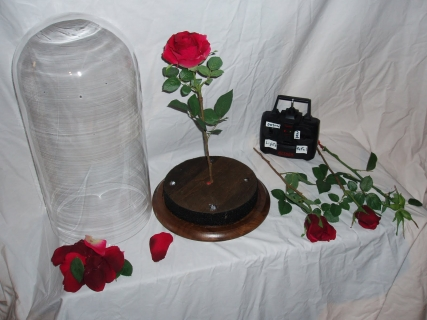 Beauty And The Beast Magic Rose And Other Props