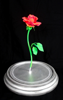Rose without Done