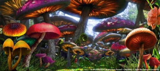 Mushroom Forest SH-AW050-S 20x45 Backdrop Rental