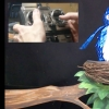 Exploding Bird for Shrek the Musical